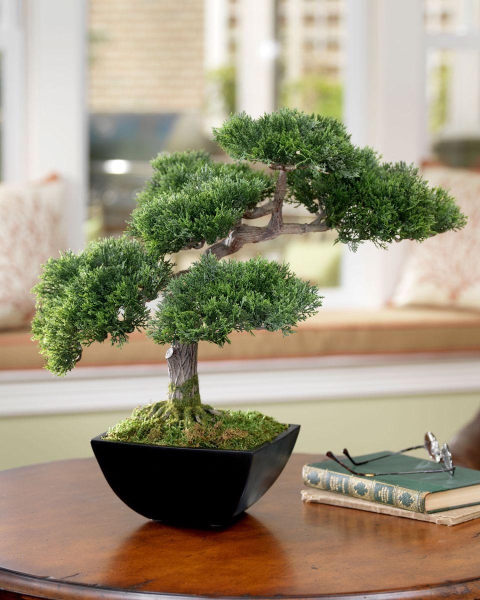 kệ để cây bonsai