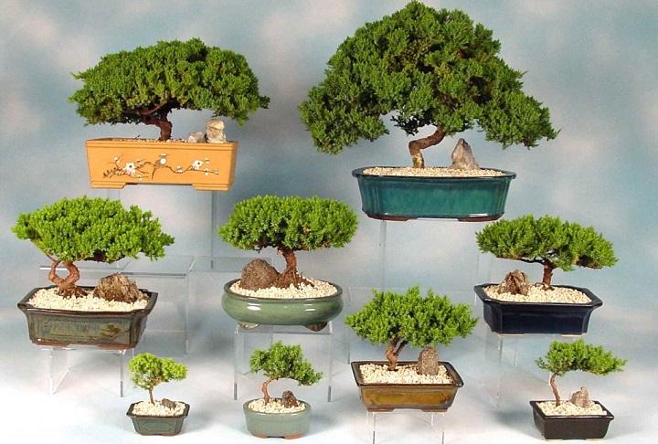 kệ để cây bonsai cây cảnh giá rẻ tphcm 2018